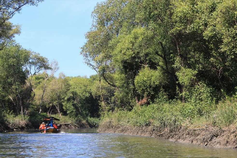A boat in a river surrounded by mangroves