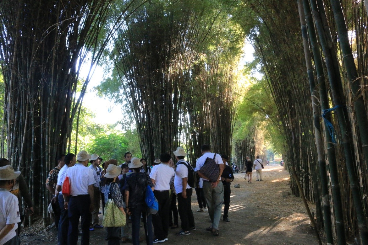 People walking between tall bamboo clumps