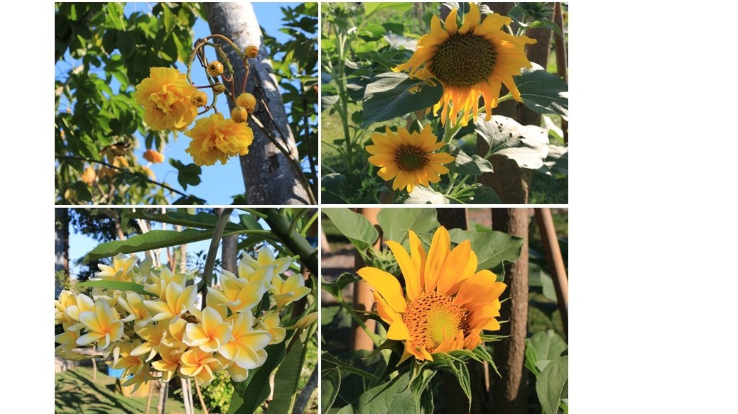 Various yellow flowers