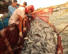 Fishermen from Masinloc, Zambales, learned the lesson from the past that overfishing depletes the ocean's wealth.